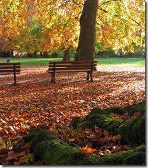 Laub_im_Stadtpark
